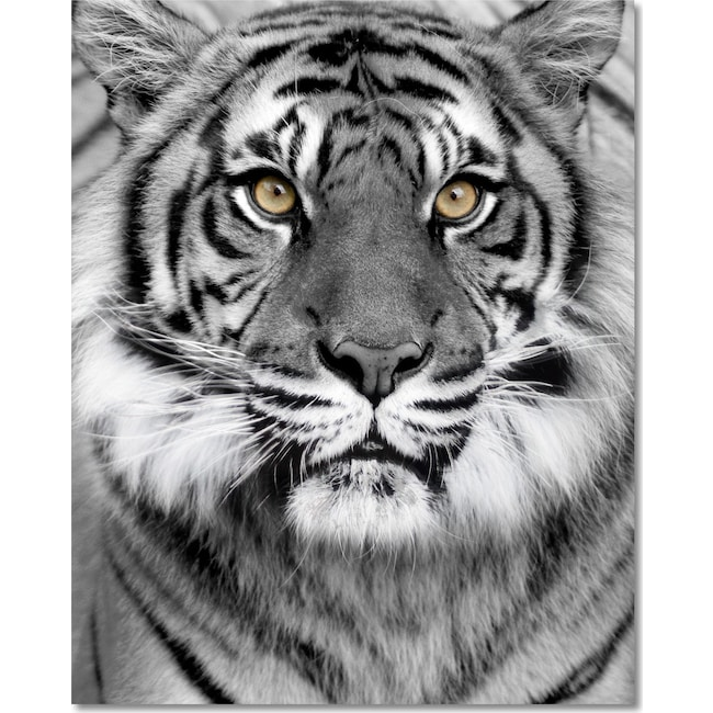 Home Accessories - Tiger on Glass Wall Art