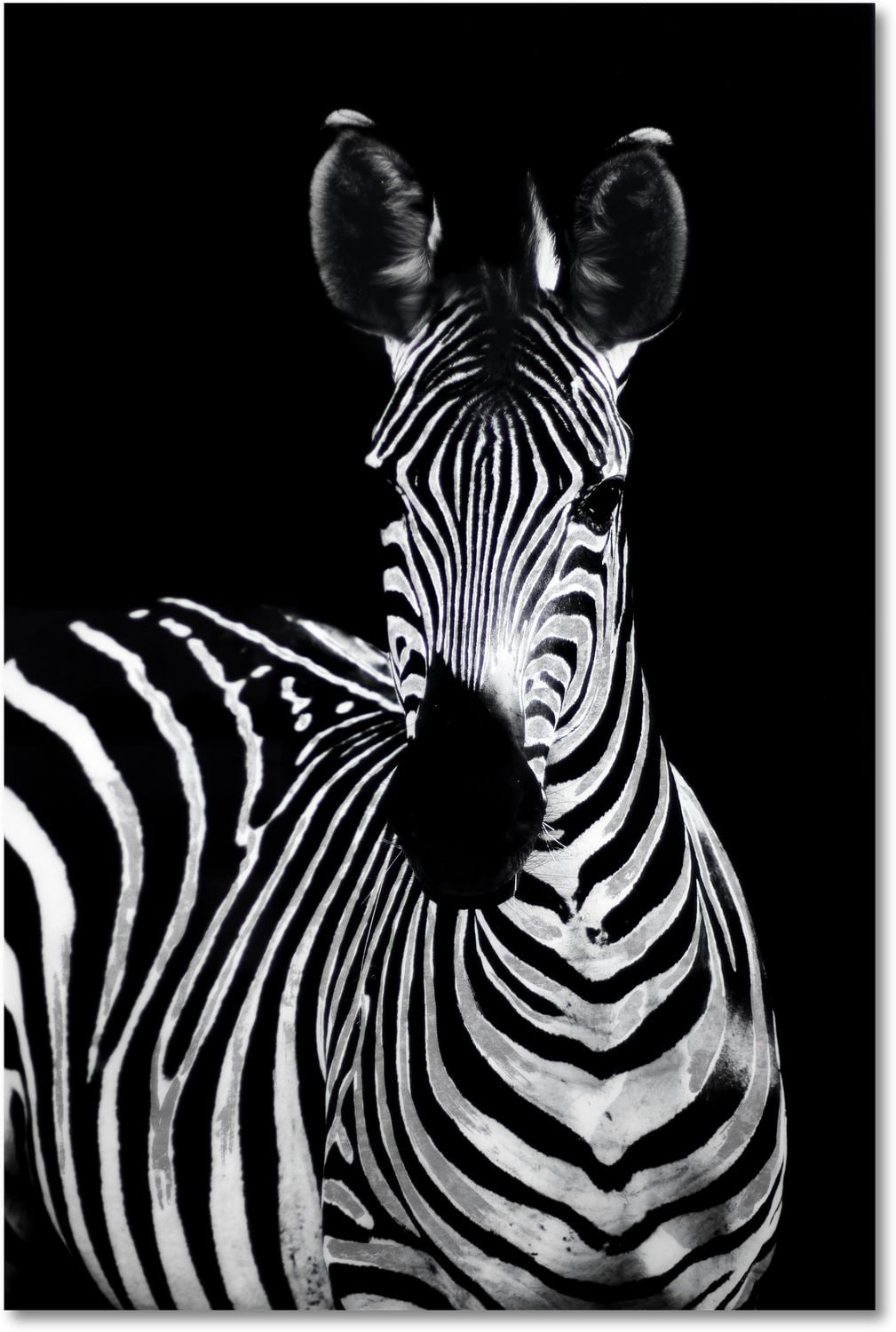 Home Accessories - Zebra on Glass Wall Art
