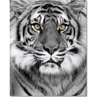 Tiger on Glass Wall Art